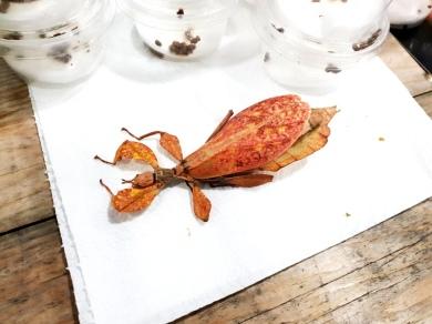 Midland Entomological Fayre (4)