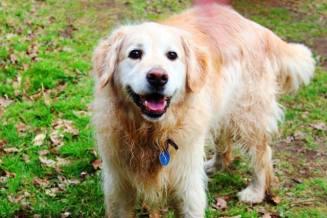 Bailey (13)