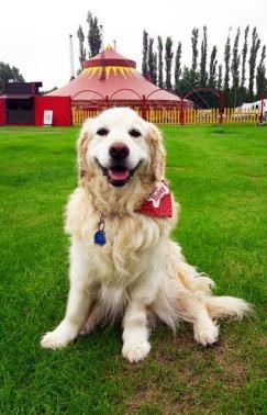 Bailey (16)