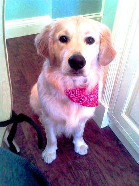 Bailey (17)