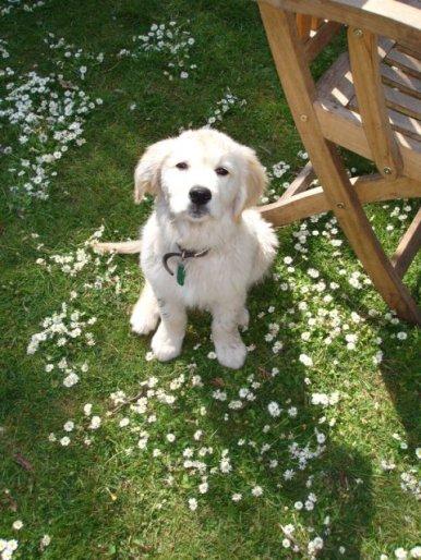 Bailey (18)