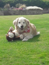 Bailey (3)