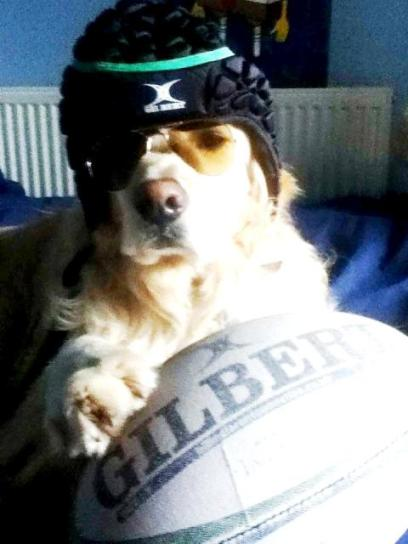 Bailey (8)