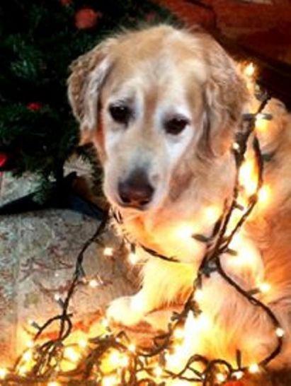 Bailey (9)
