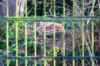 Birmingham Conservation Wildlife Park (38)