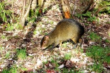 Birmingham Conservation Wildlife Park (41)