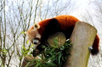 Birmingham Conservation Wildlife Park (44)