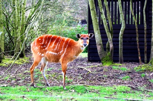 Birmingham Conservation Wildlife Park (65)