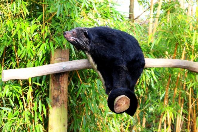 Birmingham Conservation Wildlife Park (72)