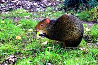 Birmingham Conservation Wildlife Park (75)