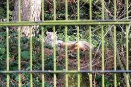 Birmingham Conservation Wildlife Park (77)
