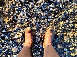 Musselburgh Beach (9)
