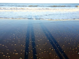 Portobello Beach (5)