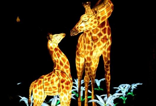 The Giant Lanterns of China Edinburgh Zoo (101)