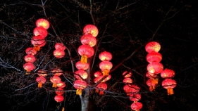 The Giant Lanterns of China Edinburgh Zoo (20)