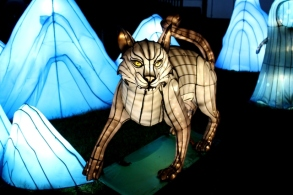 The Giant Lanterns of China Edinburgh Zoo (55)