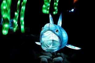 The Giant Lanterns of China Edinburgh Zoo (71)