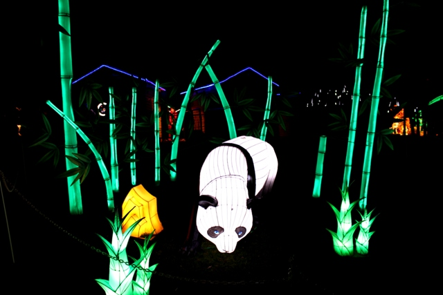 The Giant Lanterns of China Edinburgh Zoo (84)