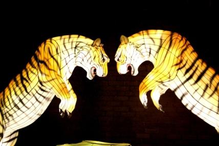 The Giant Lanterns of China Edinburgh Zoo (94)