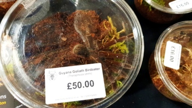 Birmingham Entomological Show (14)