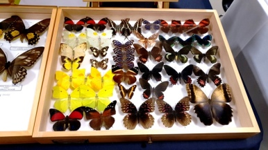 Birmingham Entomological Show (6)