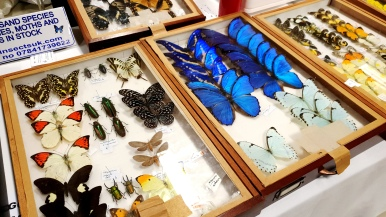 Birmingham Entomological Show (8)