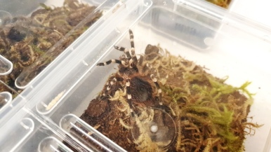 Birmingham Entomological Show (9)