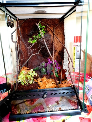 Mantis Enclosure Upgrades (10)