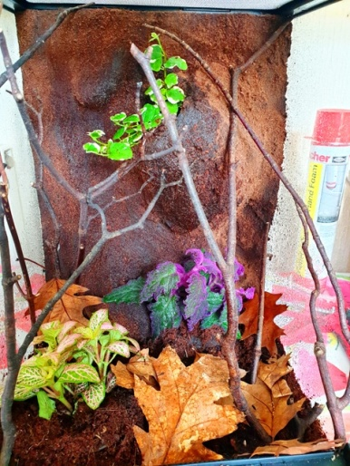 Mantis Enclosure Upgrades (11)