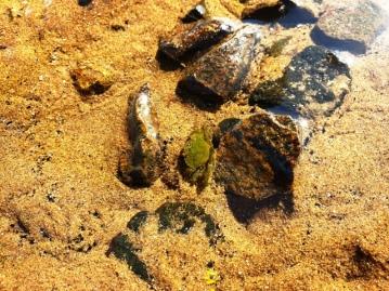 Longniddry Beach 080919 (3)