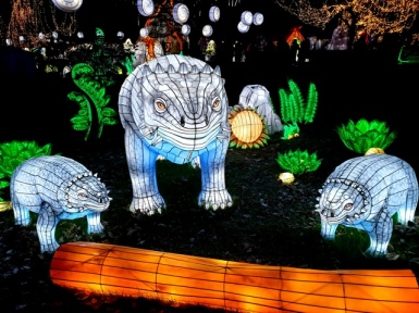 Edinburgh Zoo Lanterns 301119 (10)