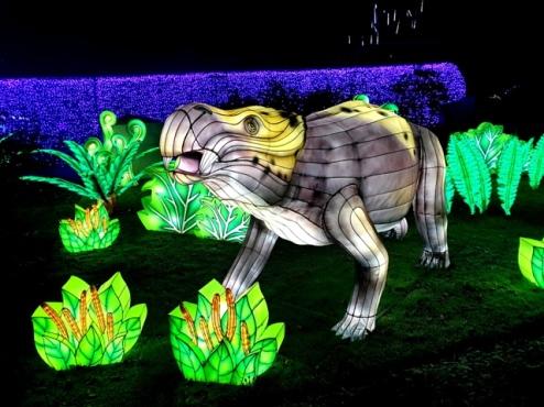Edinburgh Zoo Lanterns 301119 (19)