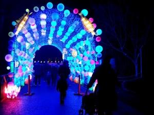 Edinburgh Zoo Lanterns 301119 (3)