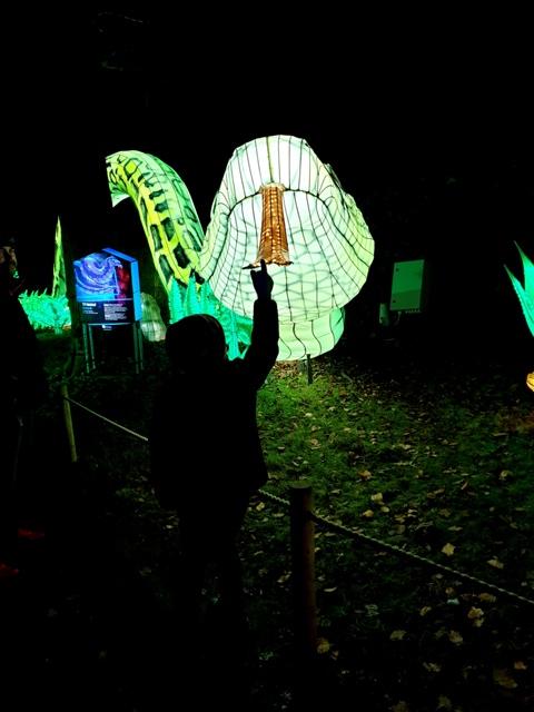 Edinburgh Zoo Lanterns 301119 (89)