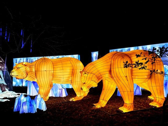Edinburgh Zoo Lanterns 301119 (97)