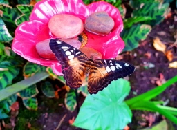 Butterfly & Insect World (18)