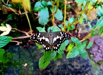 Butterfly & Insect World (38)