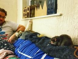 Rattos (2)