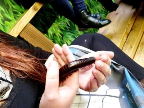 Bugtopia ChloeHenderson 100218 (2)