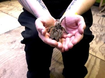 Bugtopia ChloeHenderson 100218 (30)