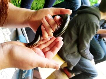Bugtopia ChloeHenderson 100218 (8)