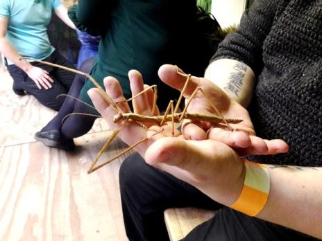 Bugtopia ChloeHenderson 100218 (9)